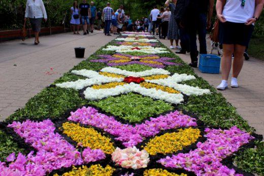 kwiatowy dywan Spycimierz
